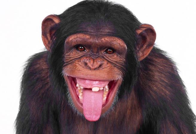 Маймуна се излекува от алкохолизъм
